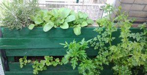 Heerlijke kruiden en groenten gekweekt op je eigen balkon