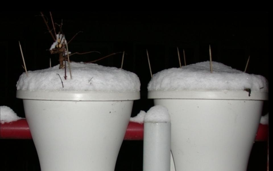 toefje-sneeuw-begin-2017-960x600_c