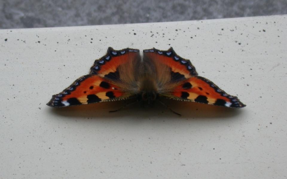 vlinder-960x600_c