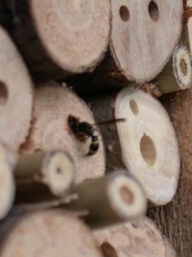 insecthotel-krijgt-eerste-bezoekers-3-375x500_c